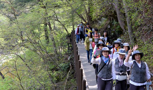 전나무숲길에서 시작해 상원사까지 오르는 선재길에 가끔씩 나타는 난구간 에는 데크로드를 만들어 노약자들도 걷는데 큰 불편이 없다.